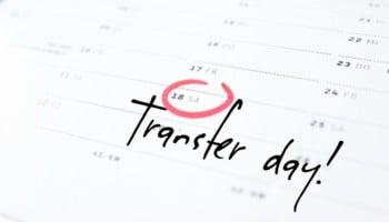 Transfer day IVF